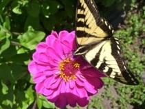 Flower-Buttterfly