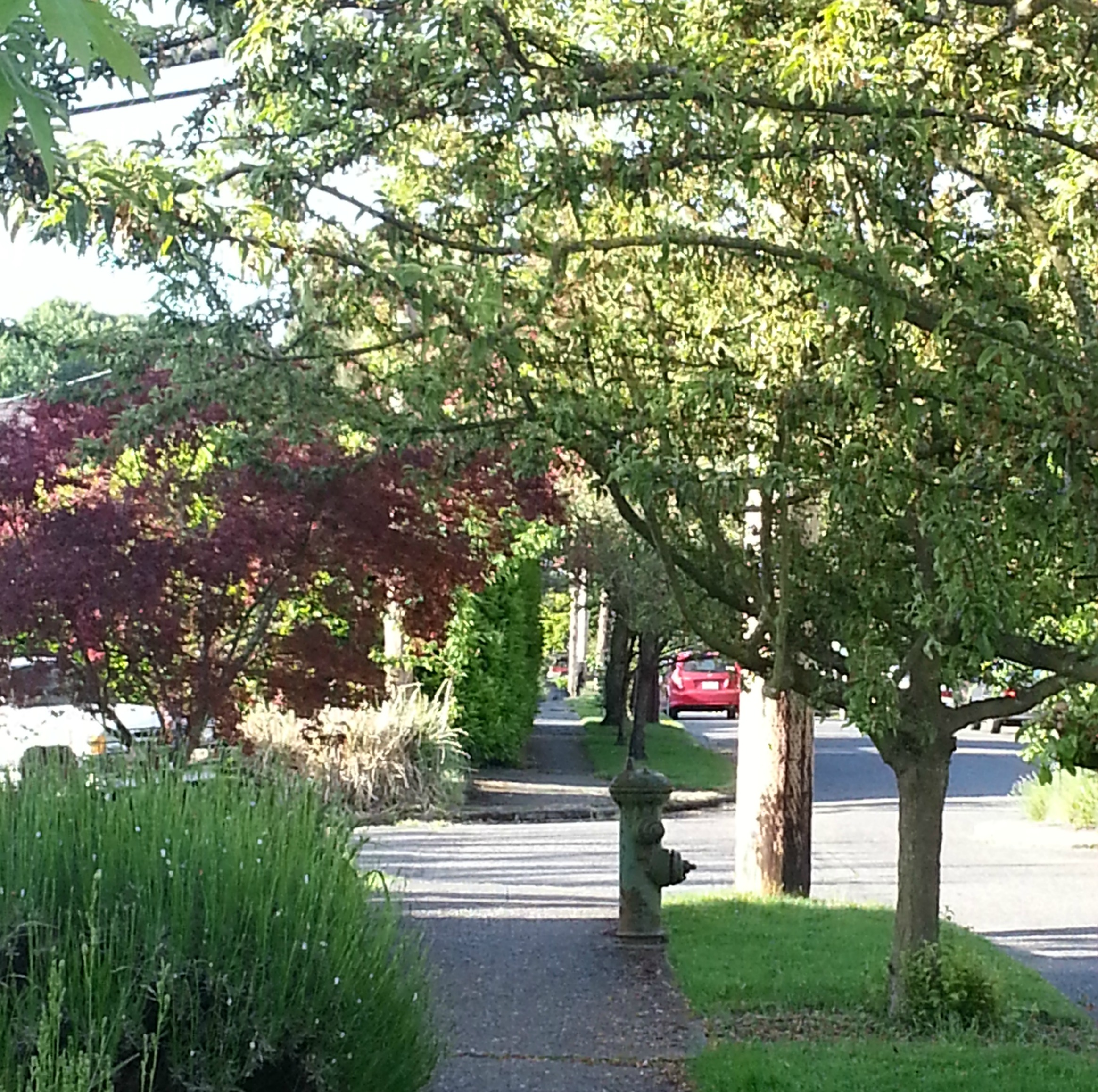 walkway of flowering trees