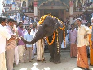 lakshmi-elephant