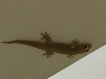 On the ceiling