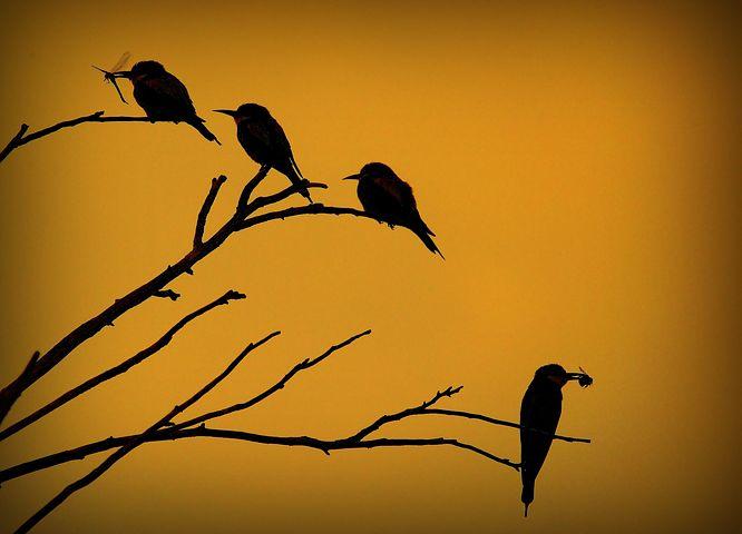 european-bee-eater-852588__480