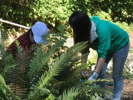Removing blackberries from the ferns