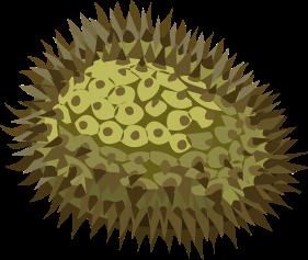 jackfruit-575688_1280